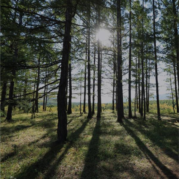 Nuevos bonos: que los árboles no impidan ver el bosque